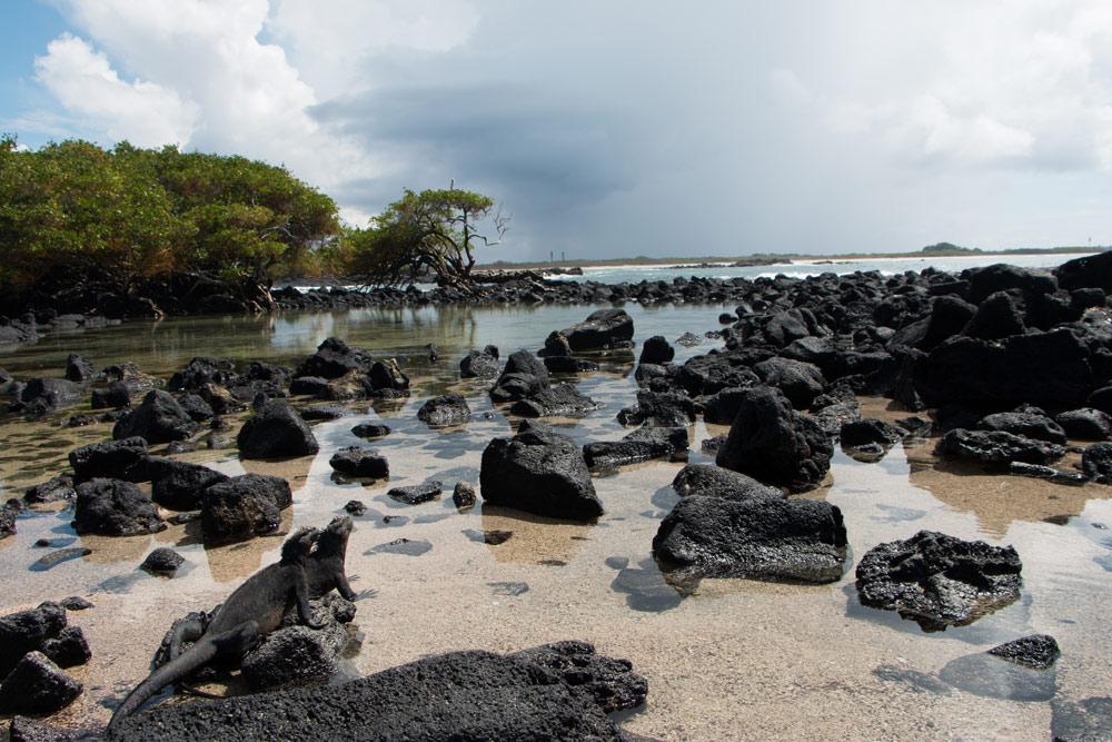 Love-Beach-Galapagos-Puerto-Villamil