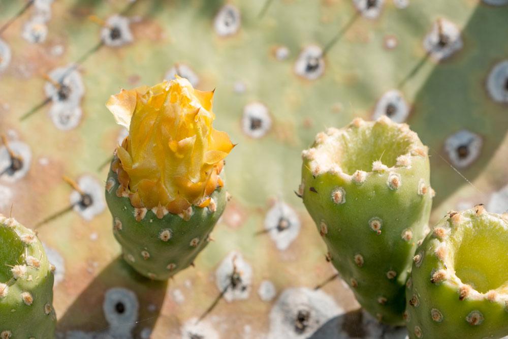 Endemic-plants
