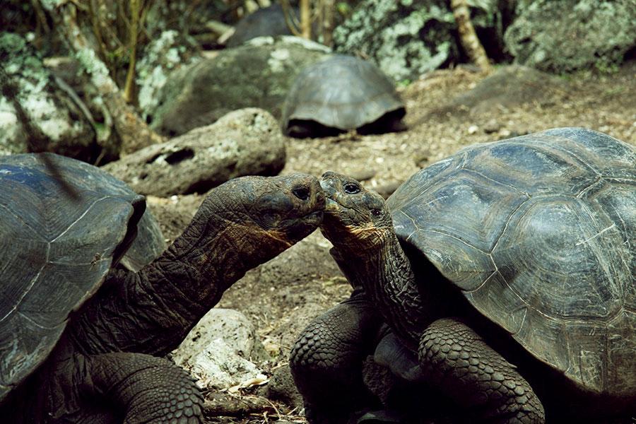 Galapagos Tortoise Station