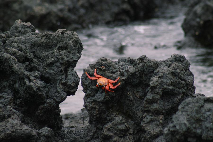 Las Tintoreras Galapagos attractions